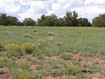 2.5 Acre Wooded Arizona Parcel on the Colorado Plateau