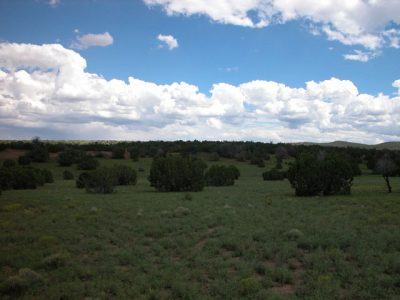 5 Acres of Wooded Arizona Land on the Colorado Plateau