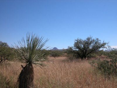.25 Acres of Southern Arizona Land near Mountains