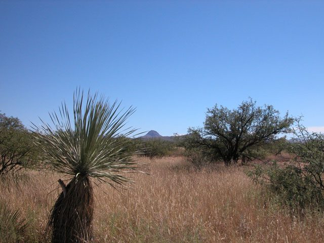 .35 Acre Arizona Parcel near the Coronado Nat. Forest