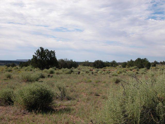 1 Acre Arizona Parcel on the Colorado Plateau Junipers