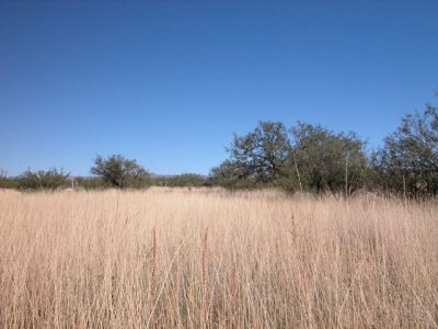 .22 Acre Arizona Parcel near Douglas Arizona