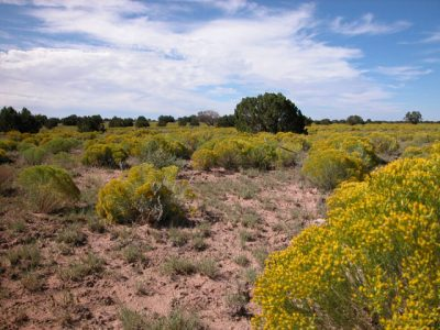 1.25  Ac. Northern Arizona Parcel in near Highway