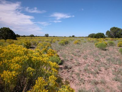 56.25 Ac. Wooded N. Arizona Ranch in near Highway