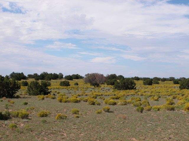 40 Acre N Arizona Juniper Covered Ranch near Interstate
