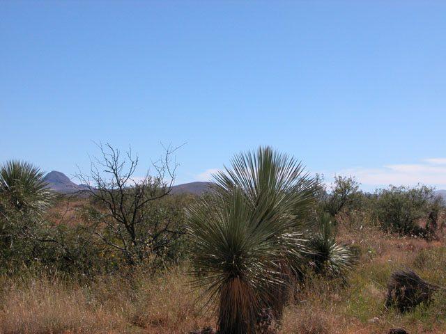 5 Acre Arizona Parcel near Sonora Mexico Douglas