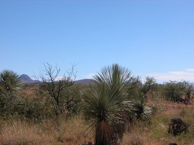 Undervalued Investment Property in Southern Arizona