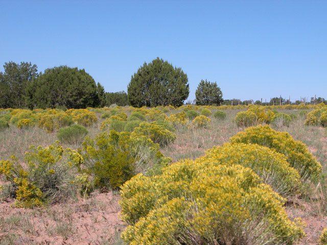 2.5 Acre Wooded Arizona Parcel on the Colorado Plateau