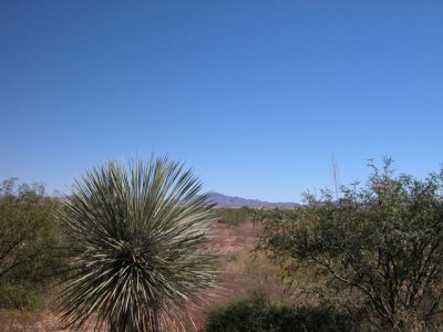 .25 Acre Arizona Parcel 12 miles from Mexico Douglas