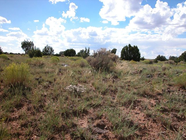 2.5 Ac. Wooded Arizona Parcel in Apache County