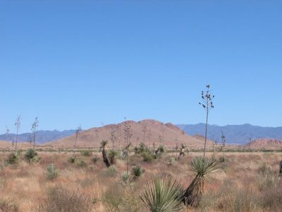 .14 Ac Arizona Lot near Willcox Short Drive to Tucson