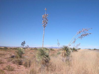 .45 Ac Southern Arizona Parcel near Douglas Bisbee