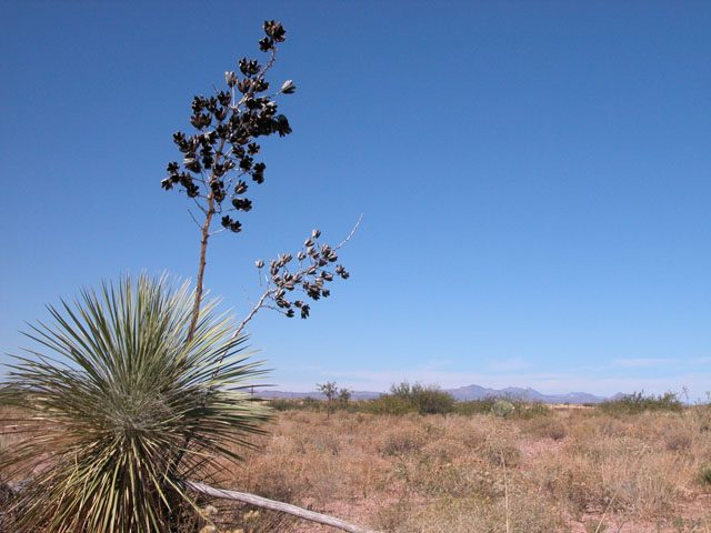 .22 Acre Lot near Douglas Arizona Good Access Views