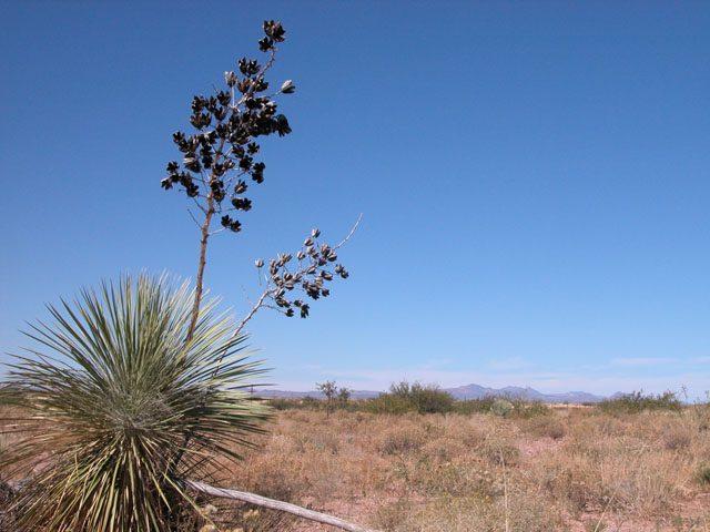 4.5 Ac Arizona Ranchette with good access near Douglas