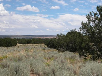 1.64 Acs of N.Arizona Investment Land No Reserve