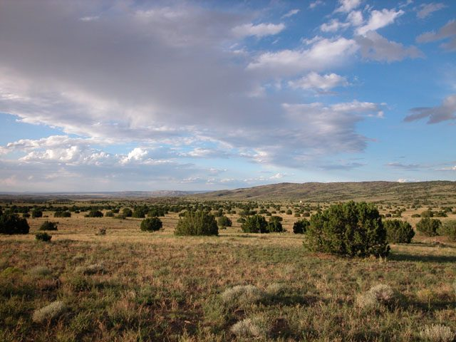 36.5 Ac Arizona Ranch in Apache County Near New Mexico