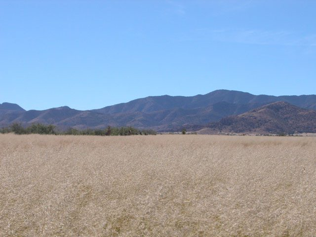 4.75 Acres of Southern Arizona Land near Douglas