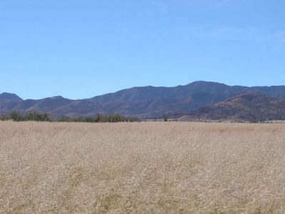 1.1 Acre of Southern Arizona Investment Land near Bowie