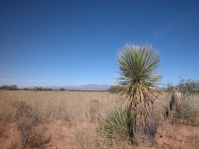 1 Acre Arizona Parcel near the Coronado Nat. Forest
