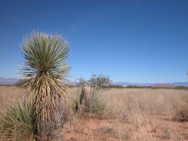 .8 Acre Arizona Parcel near the Coronado Nat. Forest.