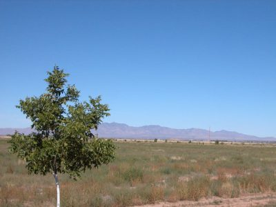 .8 Acre Arizona Parcel near the Coronado Nat. Forest