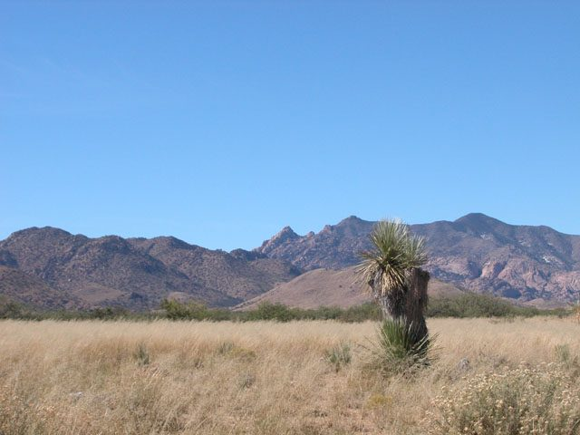 40 Acre Arizona Ranch in the San Simon Valley