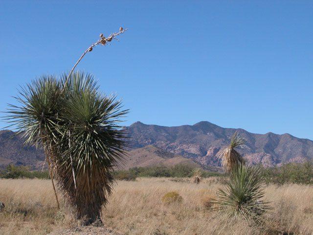 .8 Acre Arizona Parcel near the Dragoon Mountains
