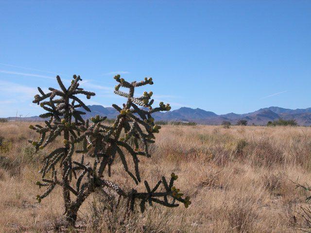 .13 Acre Parcel in Cochise Arizona Near Willcox