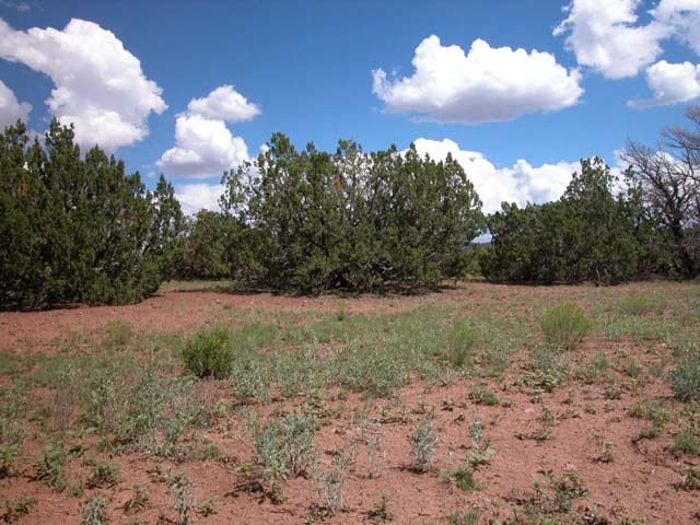 1.1 Acre Parcel in the White Mountains of Arizona