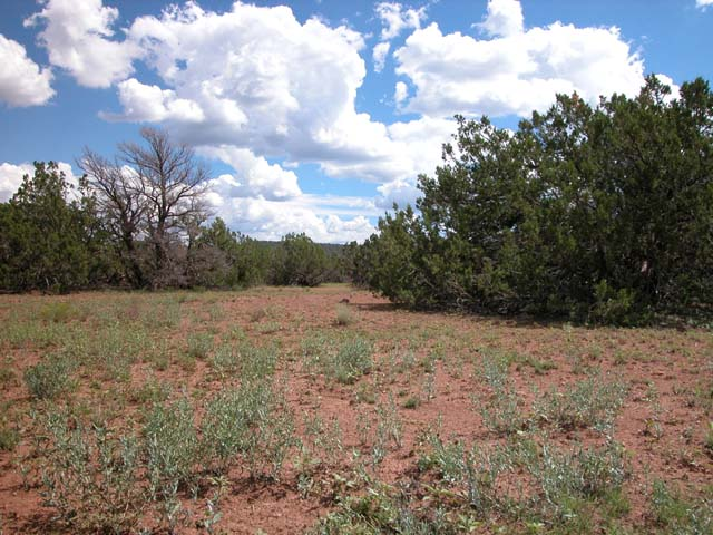 1.06 Acre Parcel in the White Mountains of Arizona