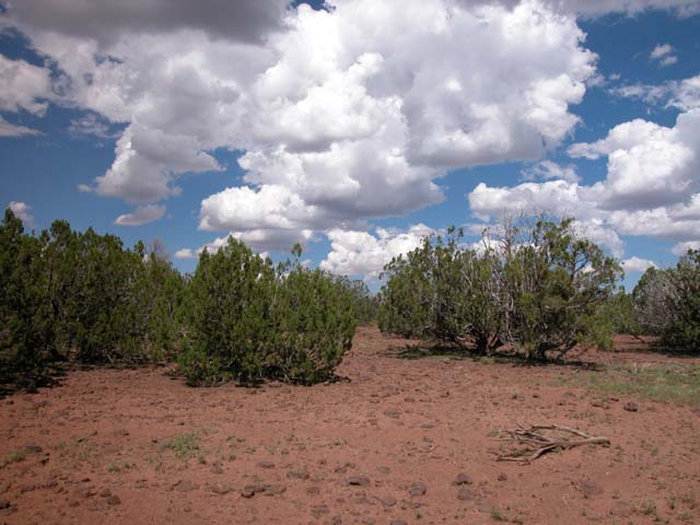 1.28 Acre Parcel in the White Mountains of Arizona
