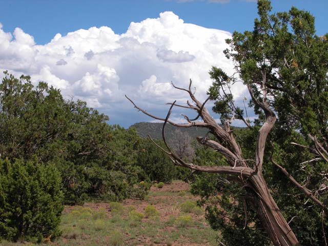 37.54 Acre Ranch in the White Mountains of Arizona