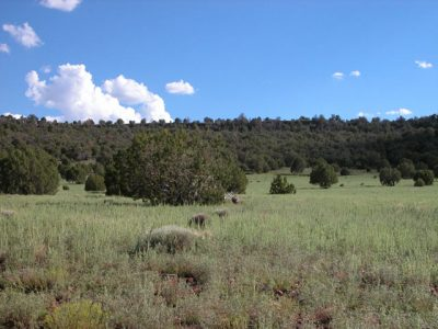1 Acre Parcel in the White Mountains of Arizona