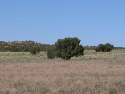 40 Acre Ranch on the Colorado Plateau Arizona