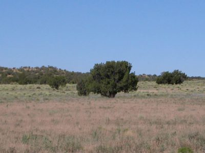 1.1 Acre Arizona Parcel in Arizona Park Estates