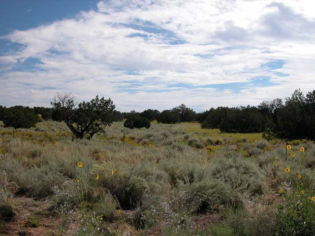 30 Acre Arizona Ranch in Apache County Near Navajo