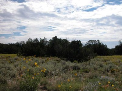 1 Acre Arizona Parcel on the Colorado Plateau Junipers