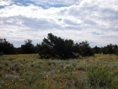 40 Acre Arizona Ranch in Apache County Near St. Johns
