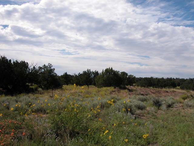 1 Ac of N. Arizona Investment Property near Chambers