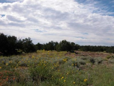 40 Acres of Arizona Ranch Land on the Colorado Plateau