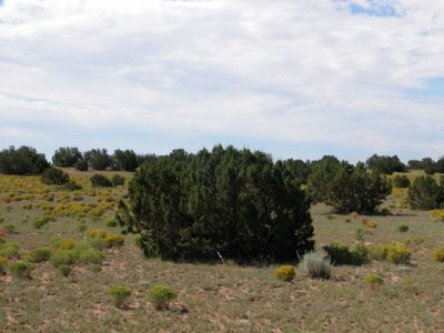 1.1 Acre Arizona Parcel on the Colorado Plateau