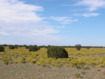 2 Acre Arizona Parcel outside National Park