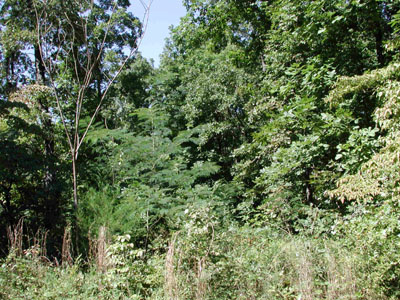1/4 +/- Acre Near Vagabond Lake in Ozark Acres AR