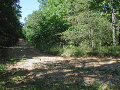 .25 Acre in Beautiful Ozark Acres Arkansas.