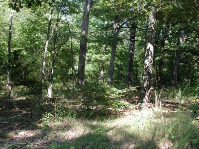 1/4 +/- Acre in Beautiful Ozark Acres Arkansas.