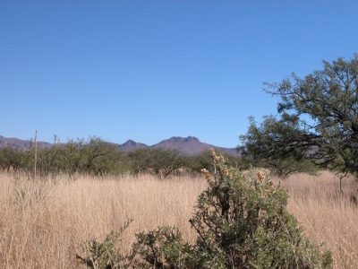 .33 Acre Arizona Parcel near Douglas Golf Club